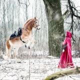 Fantasy Pferd Fotograf