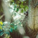 Affen in Brazil Regenwald
